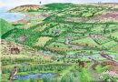 A Nature Recovery Vision for Exmoor
