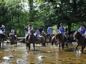 exmoor pony centre 1 1576689804