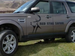 red stag safari 1