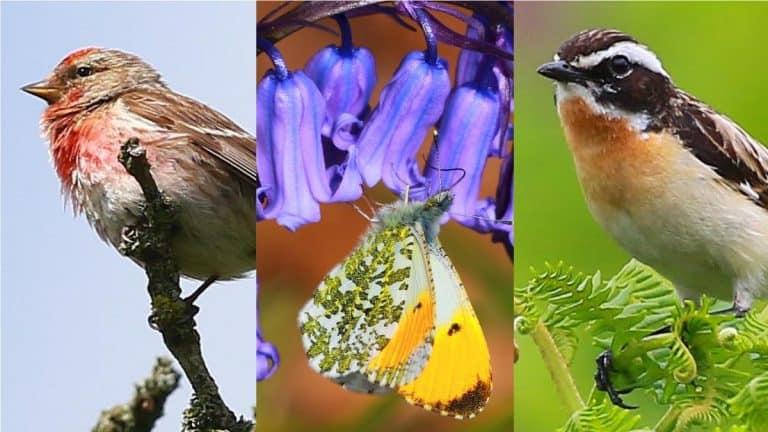butterflies  birds and goats 1 1593852644