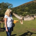 exmoor owl   hawk centre 1 1576689346