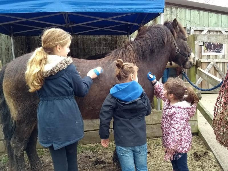pony easter activity afternoon