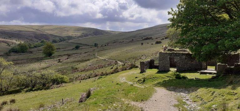 Hoar Oak Cheriton Tarka Two Moors