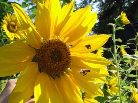 quince honey farm 2 1573461385