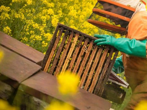 quince honey farm 3 1573461385